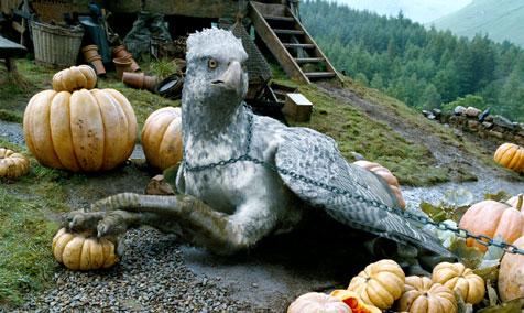 Oh, hi, Beaky. :D